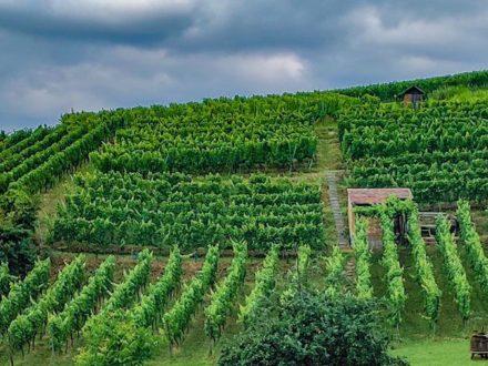 Ein guter Tropfen für Bildung - Jetzt Strahlemann Wein bestellen